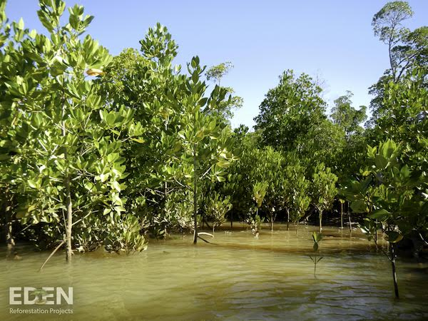 Mangroves in Madagascar